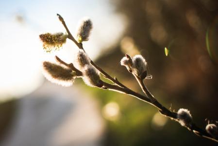 春天来了!