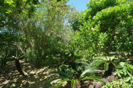 Okinawa Tree免费图片