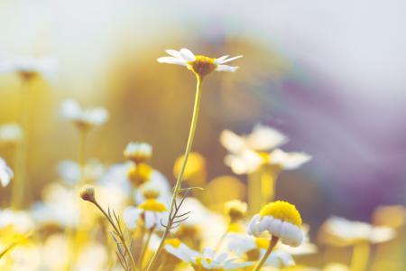 Daisy Flowers #5