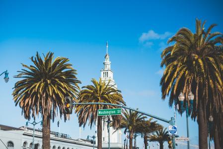 华盛顿街棕榈树在旧金山