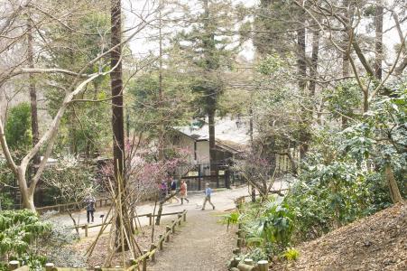 Inokashira公园免费图片
