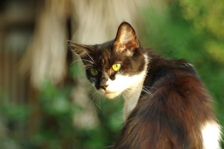猫免费图片