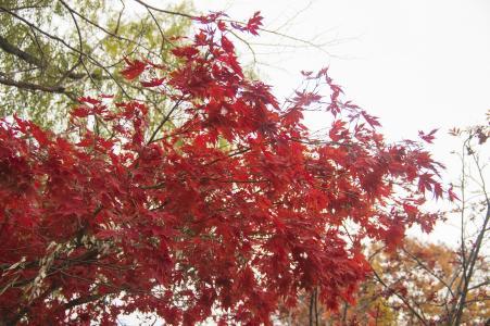 中岛公园的秋叶免费照片