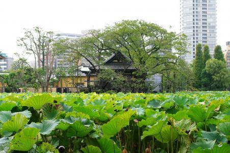 Shinobazu池塘免费图片