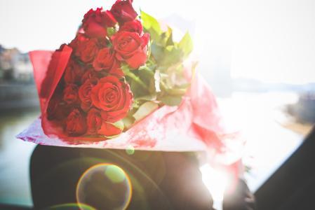 在阳光下的玫瑰花束