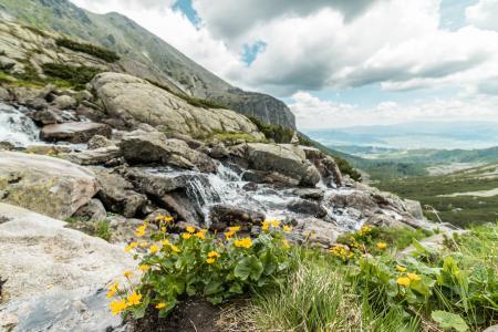 纯净的自然的黄色花和山瀑布