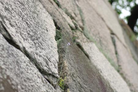 二条城 - 石垣免费图片