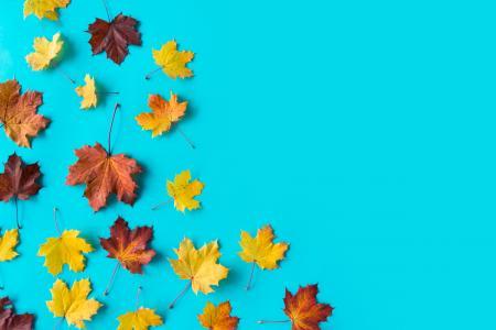 在平的蓝色背景的秋叶与文本的空间