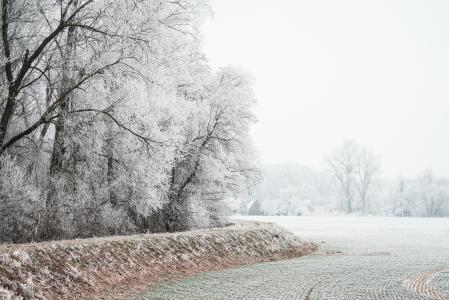 在树冰覆盖的领域和树木