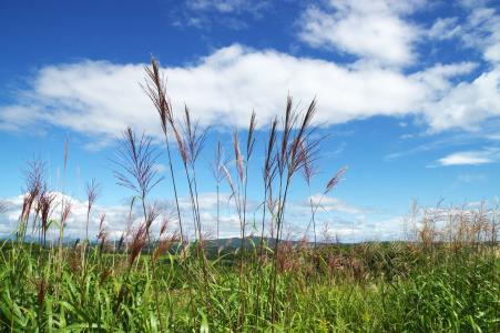 天空和自然免费图片
