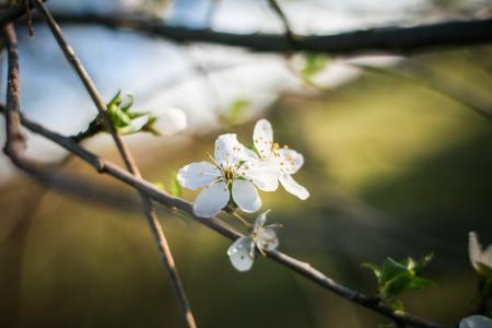 第一次春天盛开