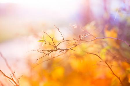 秋天的抽象颜色