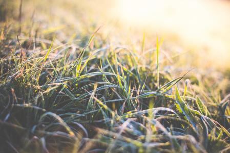 冬天早晨草覆盖着白霜