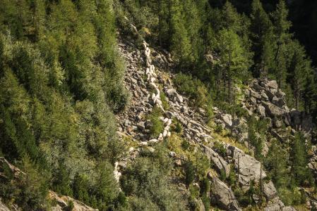 羊群在奥地利山脉的