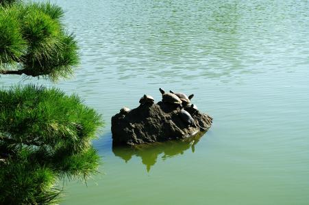 龟免费图片