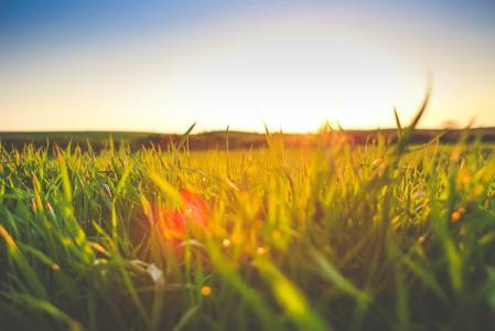 在草的日落