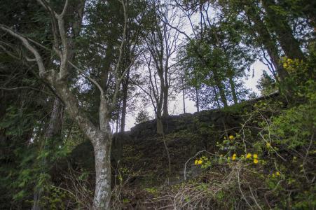 森林(日光)免费图片