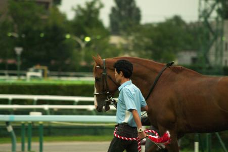 Racehorse(Deep Sky)免费图片