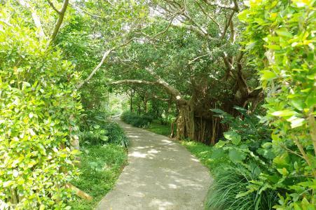 在自然中的榕树免费股票照片