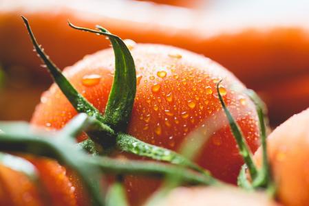 湿的番茄关闭