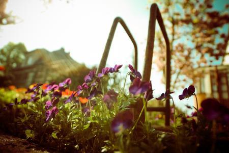 从下面的紫罗兰色花