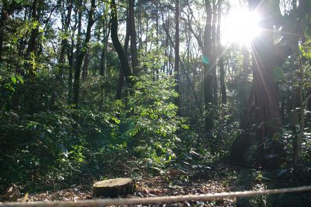 森林和太阳免费图片