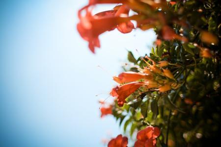 威尼斯鲜花
