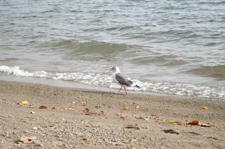 海鸥的免费股票照片