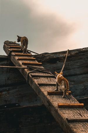 爬木梯的两只宠物猫