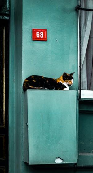 慵懒的宠物猫