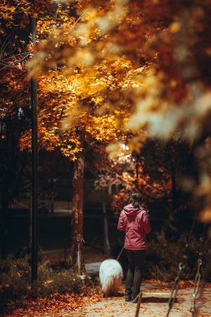 黄色枫树下的女人