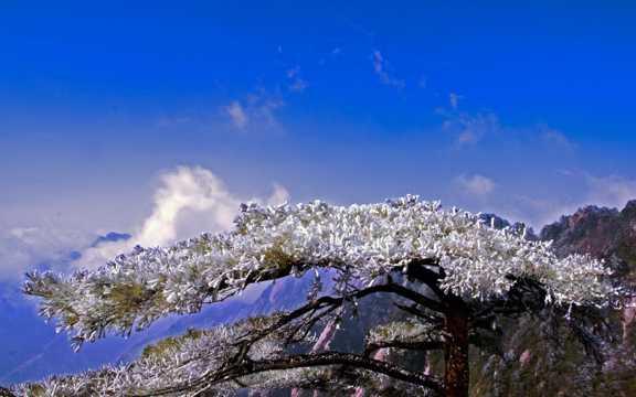黄山雾凇景致图片