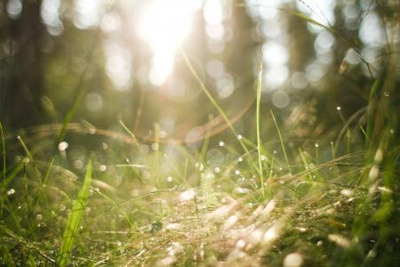 早晨森林草