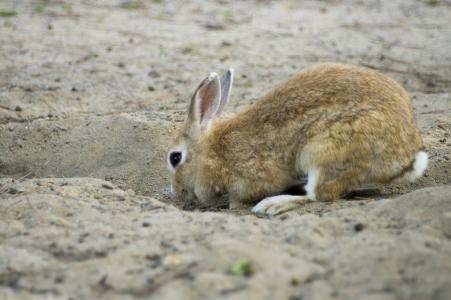 兔子洞免费照片