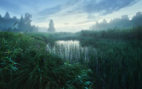 朦胧的清晨美景