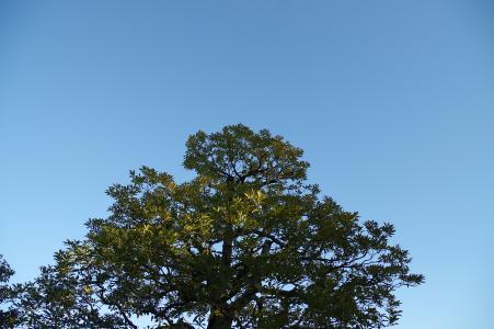 天空和木材免费图片