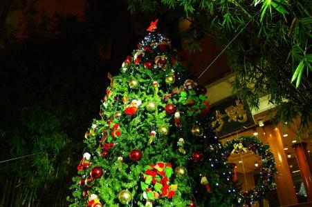 圣诞树免费股票照片
