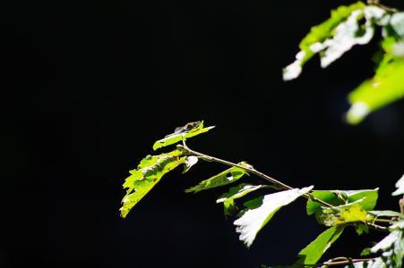 蜻蜓免费股票照片