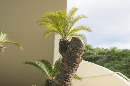 植物免费股票照片