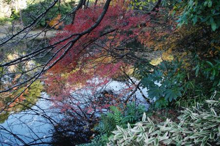 枫树免费图片