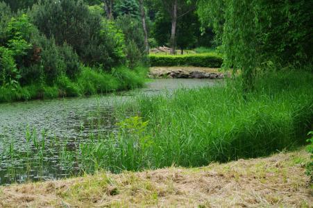 沼泽免费照片素材