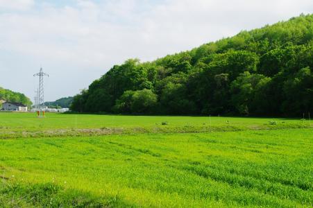 稻田免费照片素材