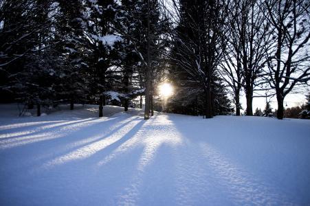 雪,树和太阳免费图片
