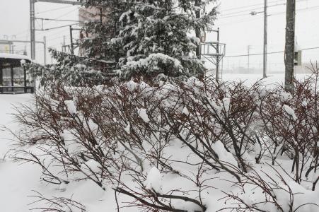 雪和树免费图片