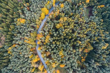 在森林空中从上面的偏僻的路