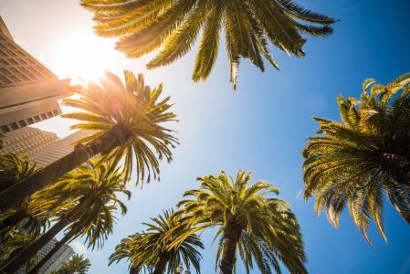 高热带棕榈晴朗的底视图