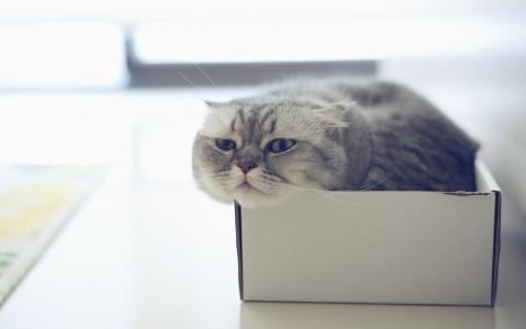 纸盒里的猫咪