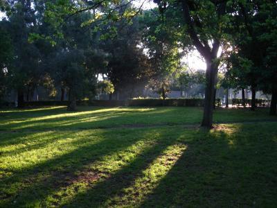 清新公园树林影子