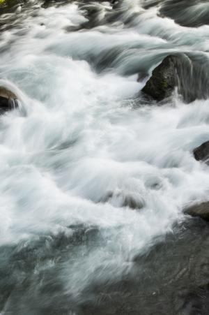 河花免费图片