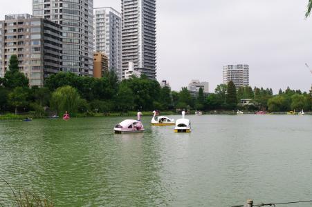 在Nozomi池塘照片的天鹅船